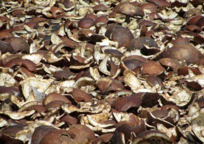 68 Tahaa cocnut drying